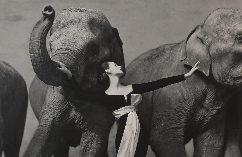 'Dovima With Elephants' by Richard Avedon, estimated at €600,000 - €900,000