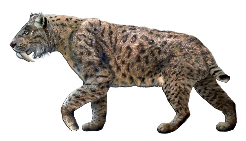 An artist's recreation of the Saber Tooth Cat (Smilodon fatalis), which lived predominantly in North America during the last Ice Age